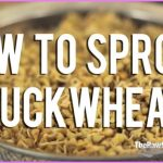 BUCKWHEAT SPROUTS And Weight Loss_4.jpg