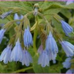 Comfrey-Benefits-and-Remedies1.jpg?fit=960%2C567&ssl=1
