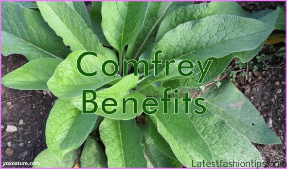 Comfrey-Benefits.png