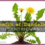 Dandelion-Benefits-660x446.jpg