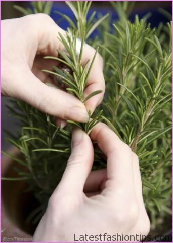 harvest-herbs_800.jpg