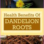 Health-Benefits-Of-Dandelion-Roots.jpg