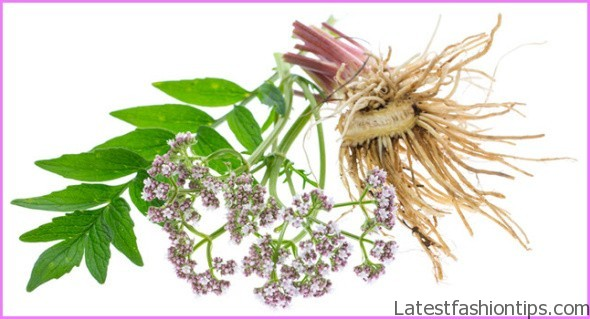 Valerian Benefits & Information_0.jpg