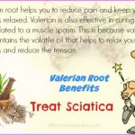 Valerian Benefits & Information_9.jpg