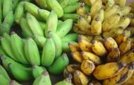 Plantain-vs-Banana