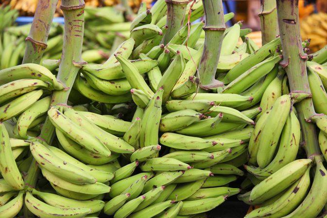 Plantain-vs-Banana (2)