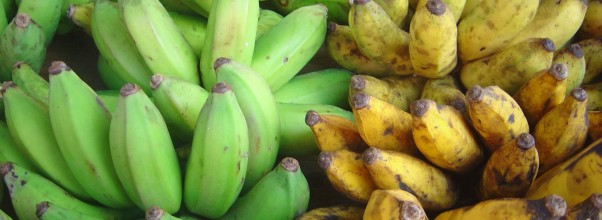 Plantain-vs-Banana