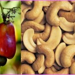 Benefits Of: CASHEW APPLE_1.jpg