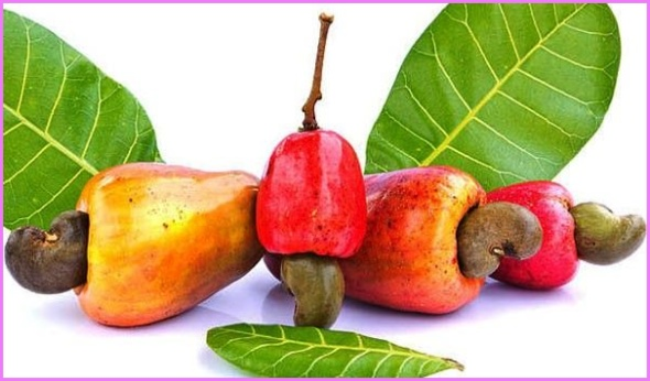 Benefits Of: CASHEW APPLE_2.jpg