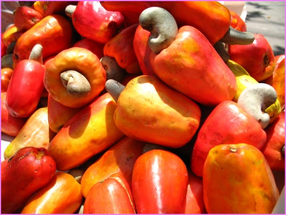 Benefits Of: CASHEW APPLE_8.jpg