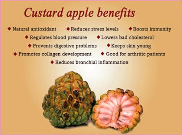 Benefits Of: CUSTARD APPLE_1.jpg