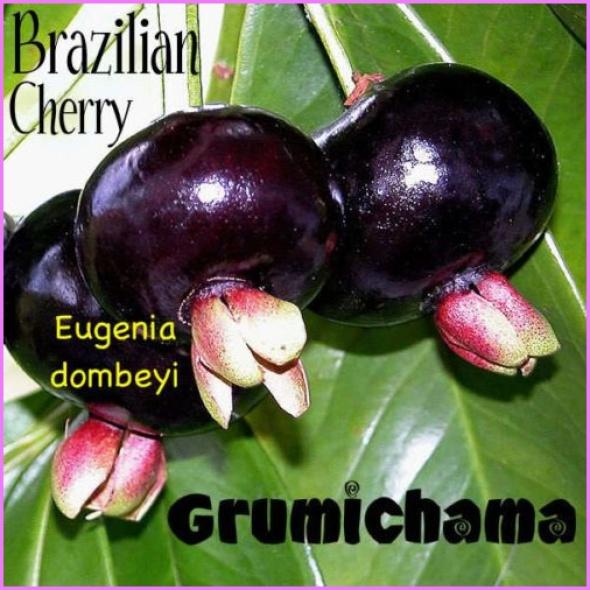 Benefits Of: GRUMICHAMA BRAZILIAN CHERRY