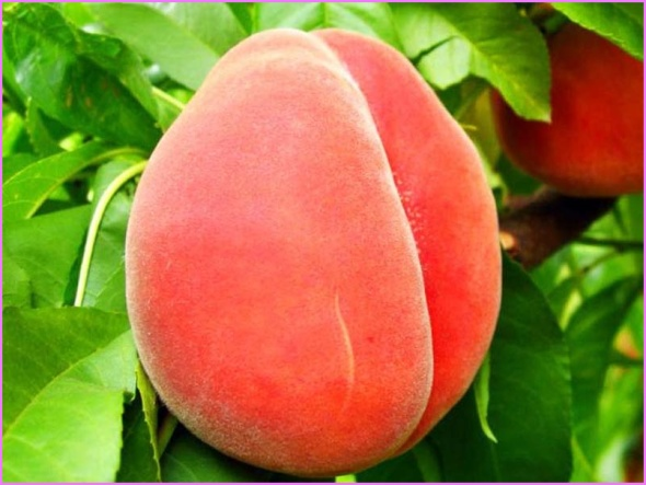 Benefits Of: TROPICAL PEACH