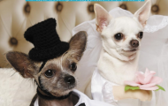 the life of pampered pets